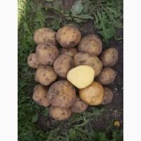 Продам товарну картоплю