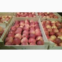 Продам яблука різних сортів оптові партії