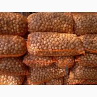 Продам орех бойный сухой