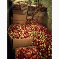 Продам яблука Айдарет Голден Лігол Семеренко Флоріна в Немирові