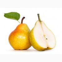 Підприємство закуповує сортову грушу, з місця Дорого