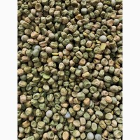 Продам зелений зморщений горох 25т