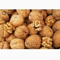 Продам грецкий орех в скарлупе хорошего качества