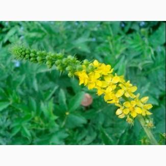 Репешок (Парило)Rzepik ziele(Agrimonia eupatoria ) за 1 кг