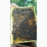Продам бджолопакети Української Степової