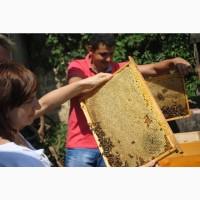 Пчеломатки Говерла Вучковские чистопородные карпатка 2021
