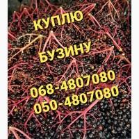 Куплю свежую бузину (ягоды в гроздьях) Харьков Суммы Донбасс