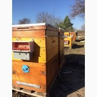 Продам пыльца пчелинная 2021г