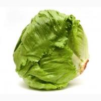 Продам салат Айсберг экспортного качества оптом из Турции