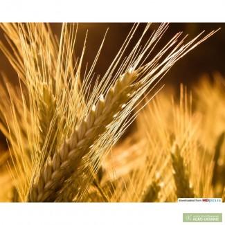Закупаем ячмень, пшеницу, кукурузу,подсолнечник, рапс, лён, горчицу, горох,сою.
