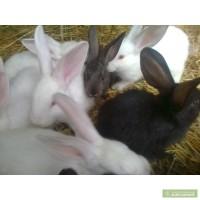 Продаю кролей в Корабельном районе