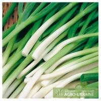 Предлагаем семена лука батун от производителя