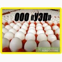 Яйцо куриное оптом. Крупный опт. От производителя
