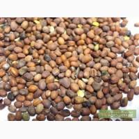 Продам семена РЕДЬКИ масличной