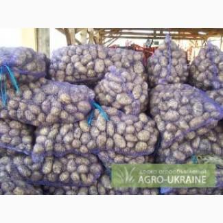 Продам картофель, продажа картофеля (картошки) оптом в Украине