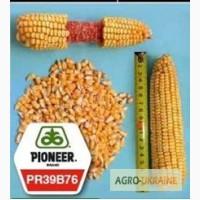 Кукуруза Пионер ПР39Б76 Остатки