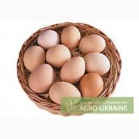 Яйца куриные любой объём
