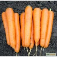 Оригинальные фирменные семена моркови Аттило F1 премиум-класса, Франция Никерсон - Цваан