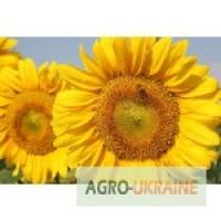 Насіння соняшника від виробника / гібриди / сорти