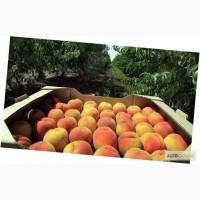 Ящики для персиков, лотки для персиков, тара для персиков