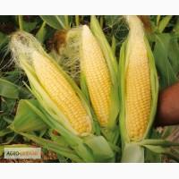 Кукуруза Тар 349 Мв