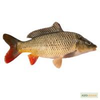 Живая рыба Киев