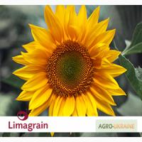 ОРИГИНАЛ!!! Семена подсолнечника Limagrain Megasun (Лимагрейн Мегасан)