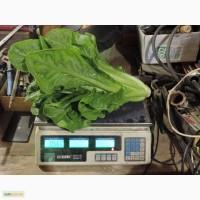 Продам салат РОМЭН