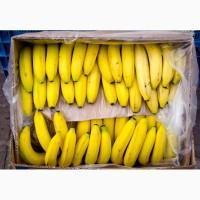 Продам банан оптом, Эквадор, Колумбия, Коста-Рика