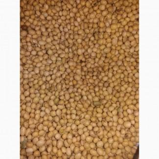 Продам насіння сої МОНРО
