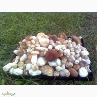 Морожені Білі гриби