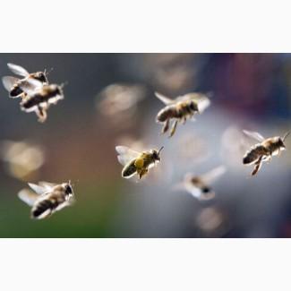 Пчелиное маточное молочко натуральное, гарантия качества, доставка по Украине