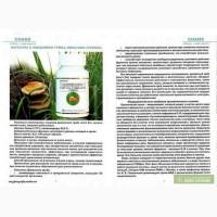 Лечение и профилактика грибами рейши, мацутаки,веселка
