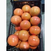 Грейпфрут Турция продам