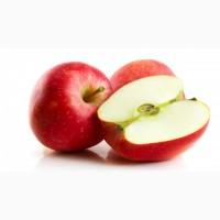 Підприємство по всій Україні закуповує яблука на переробку дорого з місця