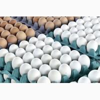 Fresh hen eggs C0, C1, C2 Export / Яйцо куринное свежее на Экспорт