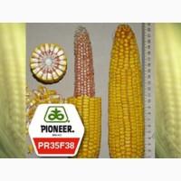Семена кукурузы PR35F38 Пионер