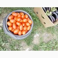 Продам грунтовой помидор сорта:Пьетра Росса