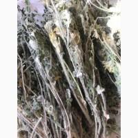 Продам сушену траву Астрагалу
