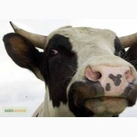 Сыворотка молочная сухая купить