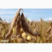 Предлагаю раундап устойчиви семена Сой АВРОРА - 1р