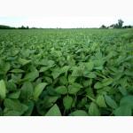 Продаю раундап устойчиви семена Сой АВРОРА - 1р. 80 дней