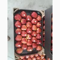 Продам Яблука (гуртом)