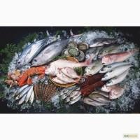 Продам Живую Рыбу опт
