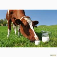 Продам цельное коровье молоко