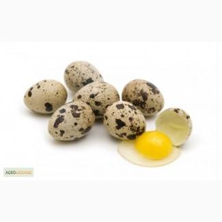 Яйца перепела домашнее