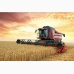 Продам Канадский ярый трансгенный сорт твердой пшеницы RAINY