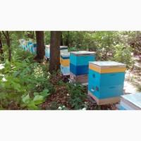 Распродаю пчел. СРОЧНО. продам пчел улики пчелосемьи ульи бджоли