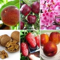 Купить саженцы весна 2018–Большой выбор отборных саженцев, 500 сортов Азбука сада