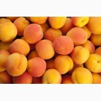 Продаем абрикосы нового урожая